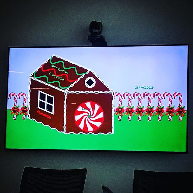 Potentially less festive, Calvin's metaphorical gingerbread house I.e. science career. #science #lab #powerpoint #lowres
