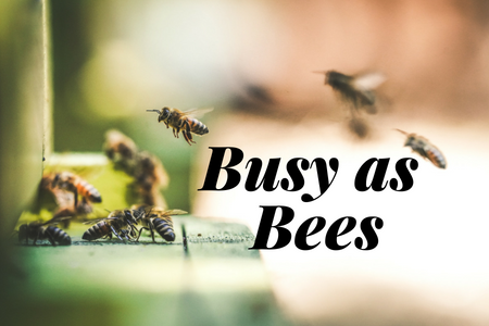 Busy as Bees - blog.png
