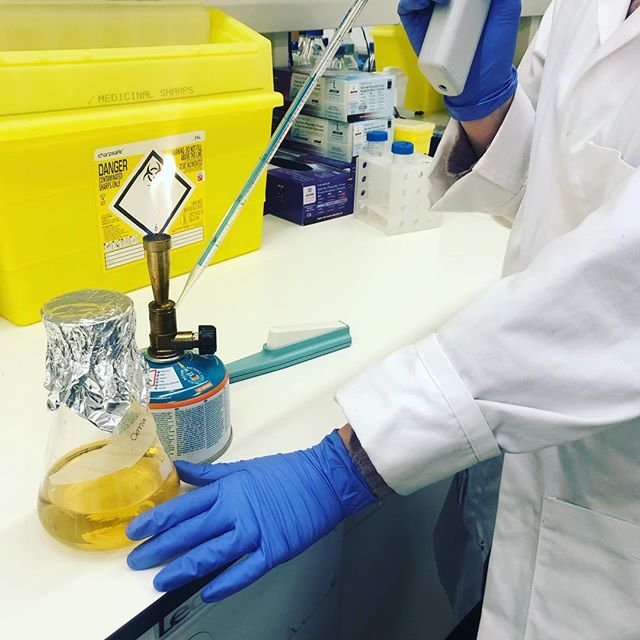 Something's smelling a bit 'fragrant' in the lab today 🤪 #students busy growing up some #plasmids - Bunsen burner at hand to #sterilise the area and a flask containing some broth and #ampicillin to help them grow 😁 . . . . . . #science #artofscience #scienceart #labwork #laboratory #scientist #scientistsofinstagram #womeninstem #lablife #biology #genetics #sciencecommunication #lab #sciences #sciencegeek #scienceiscool #sciencenerd
