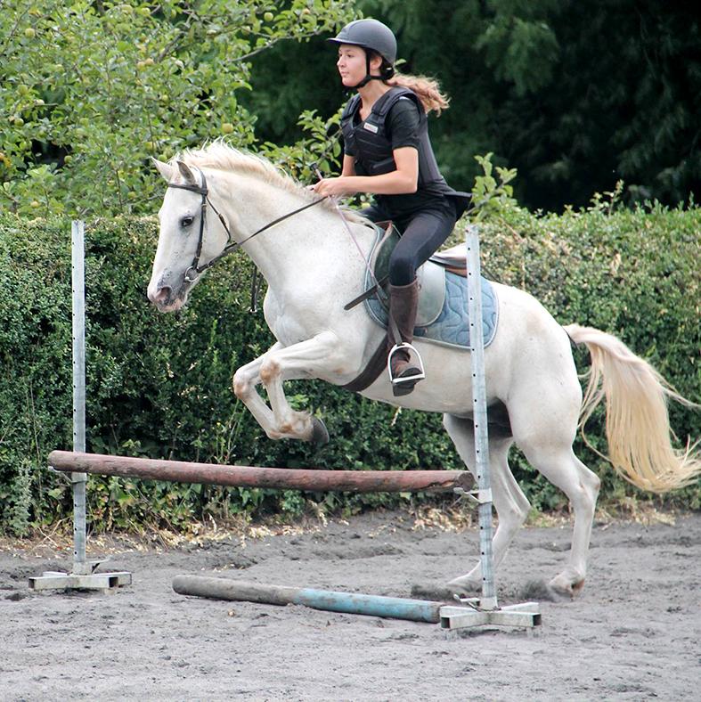 stages équitation CSO