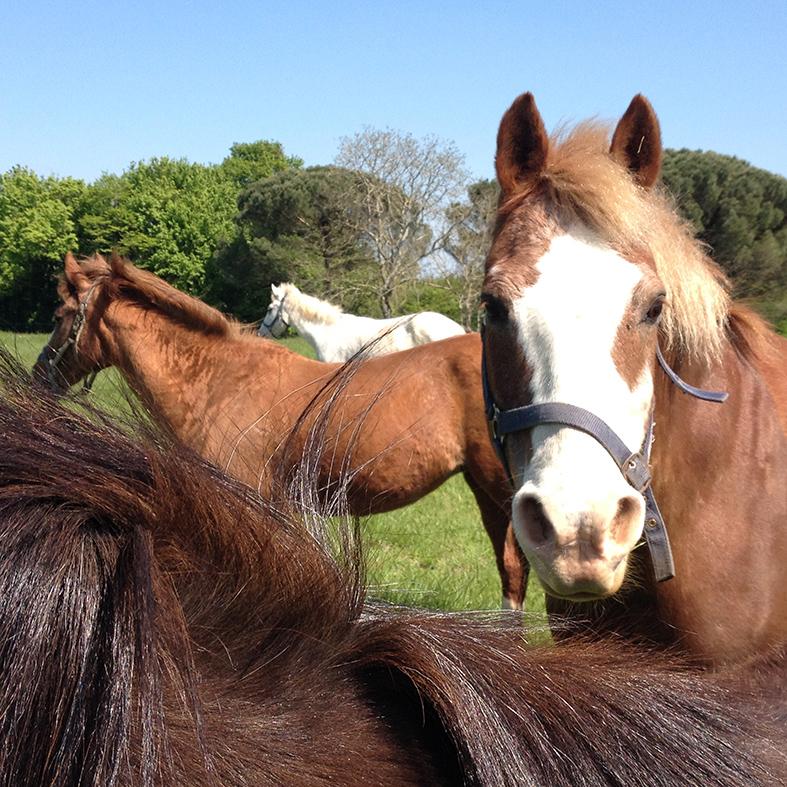vacances à cheval en famille