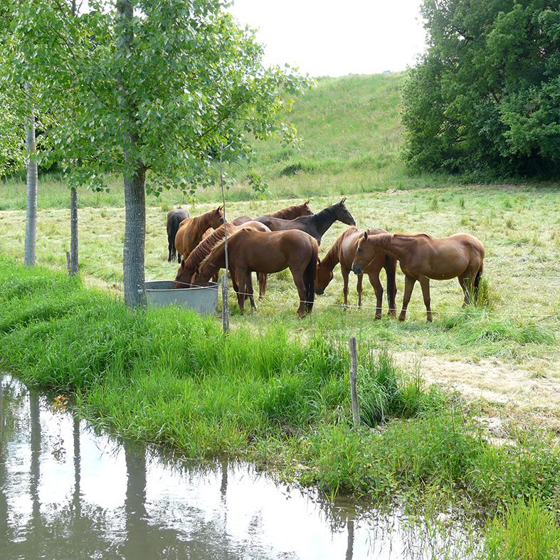 vacances à cheval pour adultes