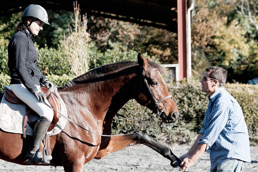 Séjour équestre sportif - Séjour avec stage de découverte de l'équitation, initiation à la randonnée équestre, ou stage de perfectionnement dressage et/ou obstacle. Deux leçons par jour. Passage de galops.