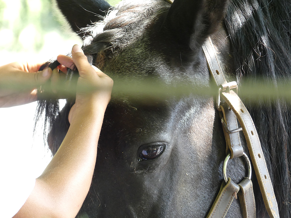 soin-chevaux.jpg