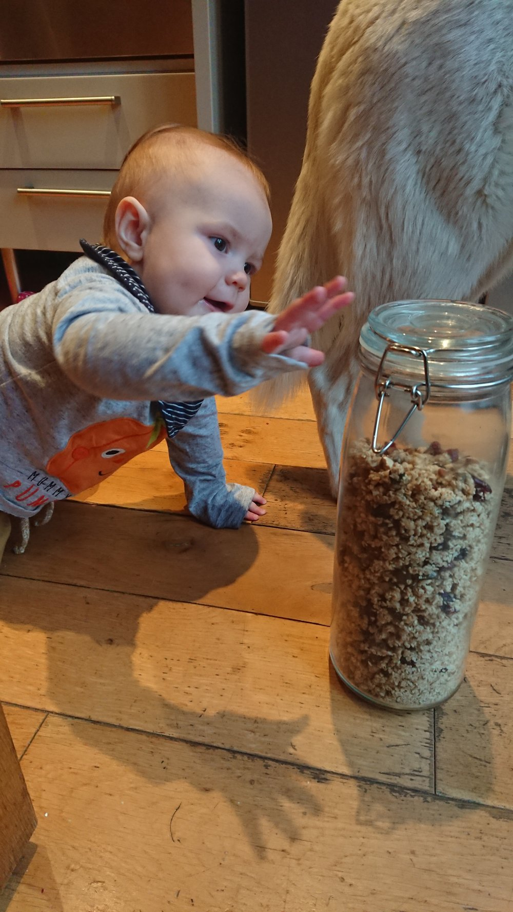 Granola so tasty my tiny son will try to steal it despite the wolf-guard.