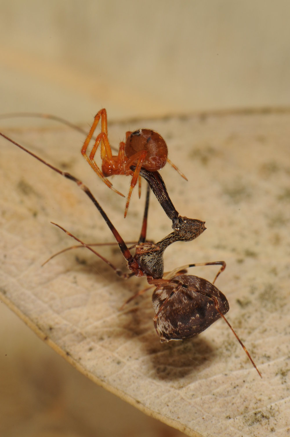 2-spidereatspi.jpg