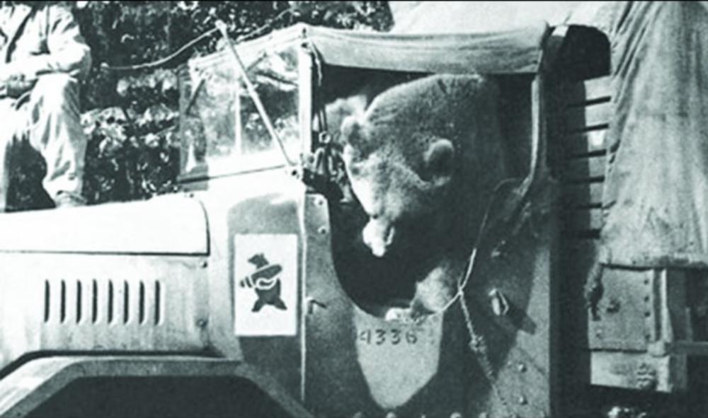 Wojtek-the-Bear-6.png