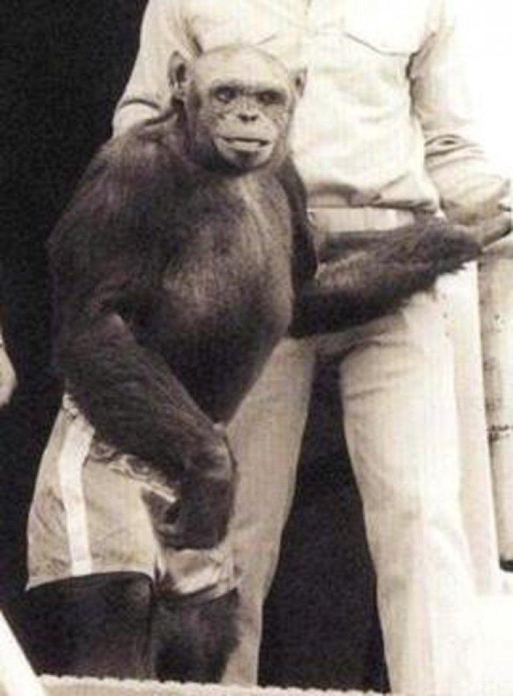 oliver-the-chimp.jpg