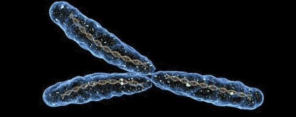 es-el-cromosoma-y-culpable-de-que-los-hombres-vivan-menos_full_landscape.jpg
