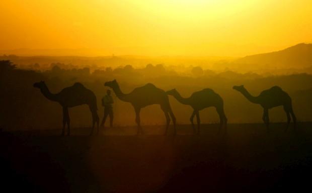 merenguemilengue_india_rajastan_pushkar_feria_camellos_contraluz_fotografía.jpg