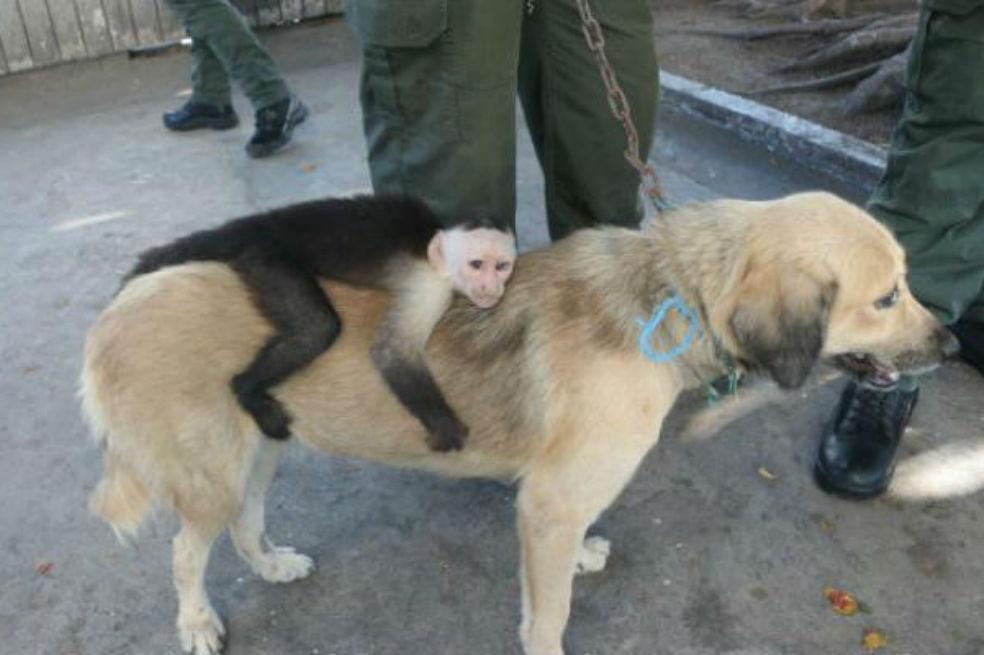 mico-y-perro-1.jpg