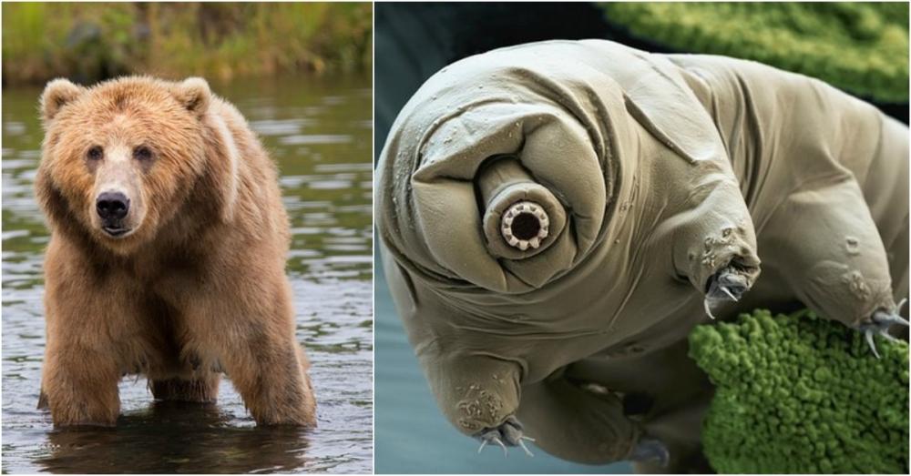 oso-de-agua-el-animal-mas-fuerte-de-todos.jpg