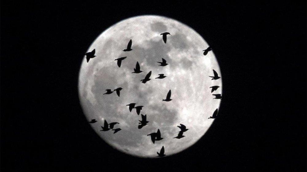 luna-llena-cubierta-por-una-bandada-pajaros-que-sobrevuelan-roma-enero-1517340860370.jpg