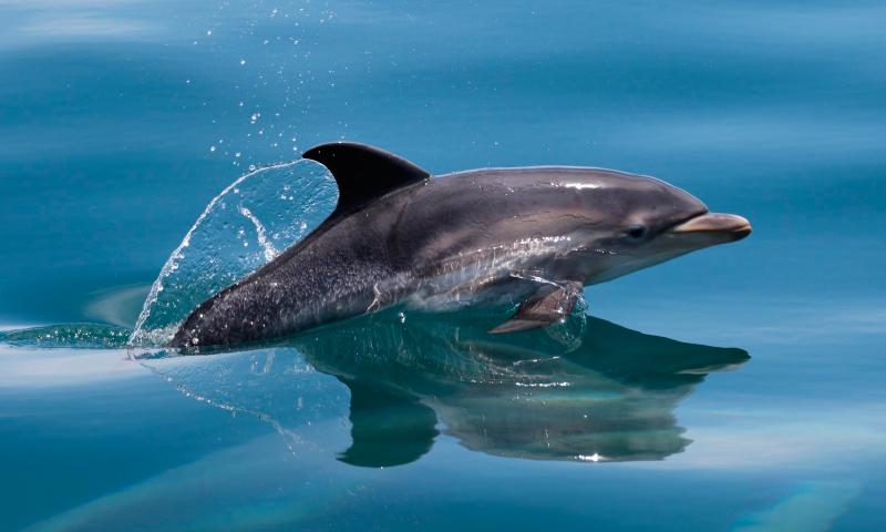 taxonomia-delfines.jpg