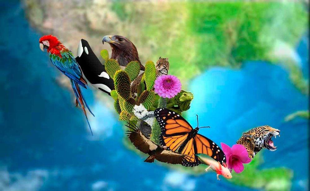 Beneficios-Obtiene-México-de-su-Biodiversidad.jpg