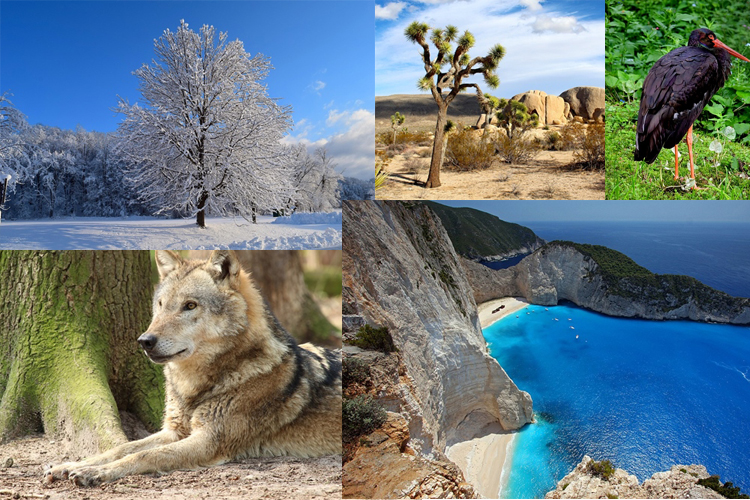 biodiversidad-composicion.jpg