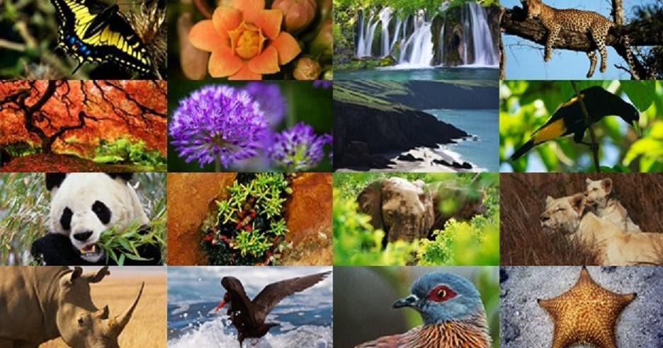 2018-12-13_5c11c8cdb842a_Biodiversidad2.jpg