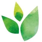 Transition-Leaf-RGB-01.jpg