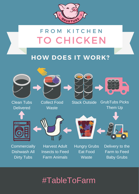 How does food waste become animal feed? - We grow protein-rich insects that become a high-quality food source for chickens, pigs, and fish. Check out our infographic showing the process!