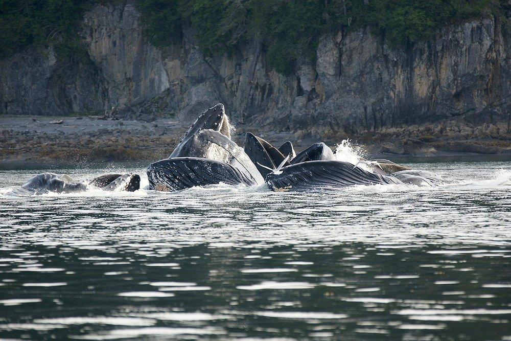 whales 4.jpg