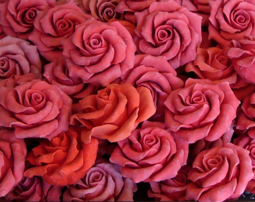 rose-21191.jpg