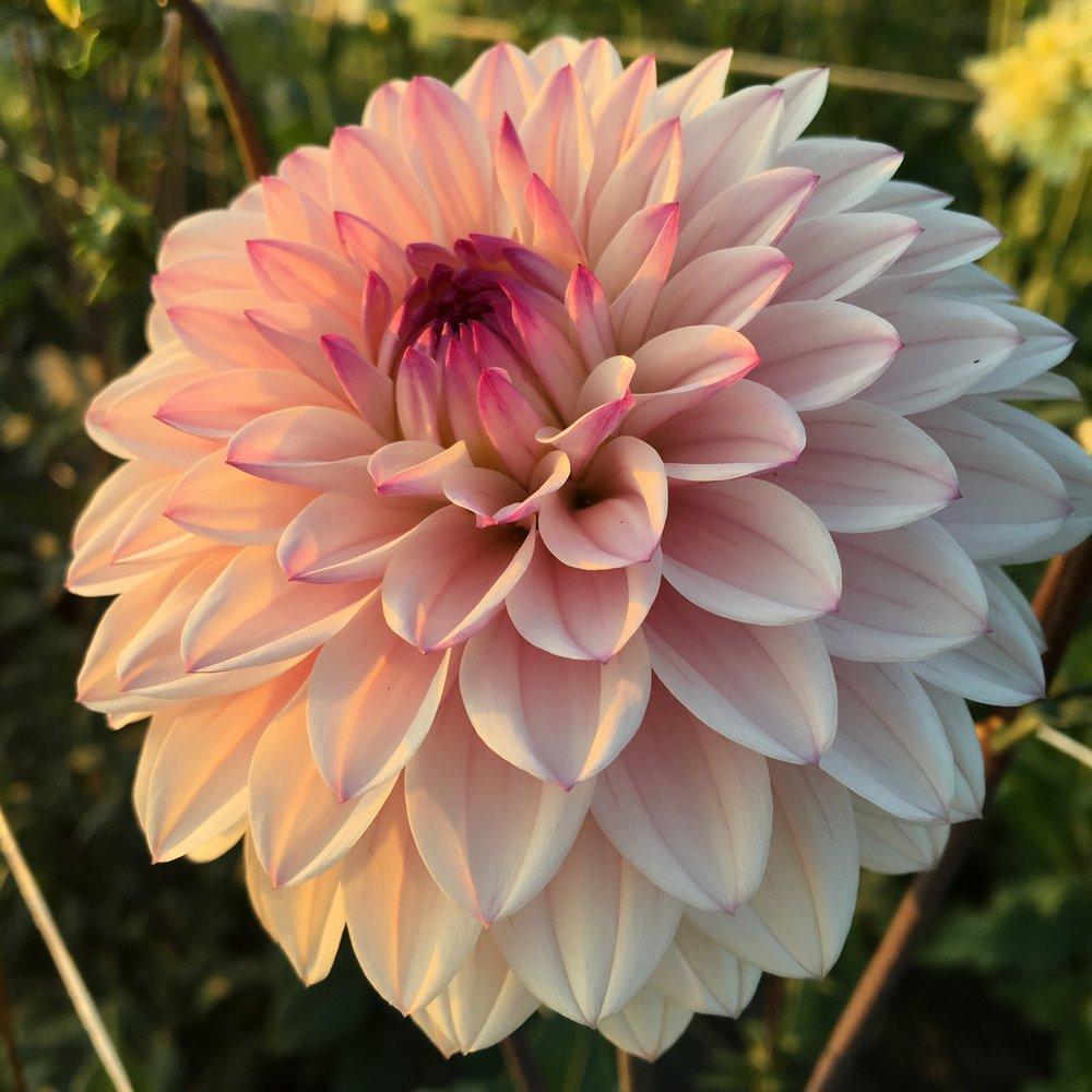 Clara joyce flowers welcome to clara joyce flowers izmirmasajfo