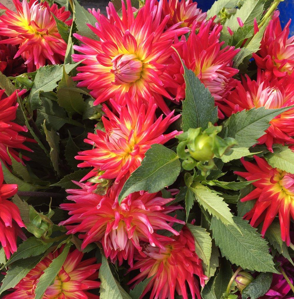 Wholesale Clara Joyce Flowers
