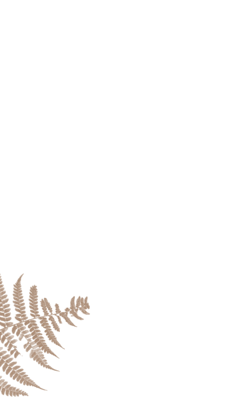 side_fern2.jpg