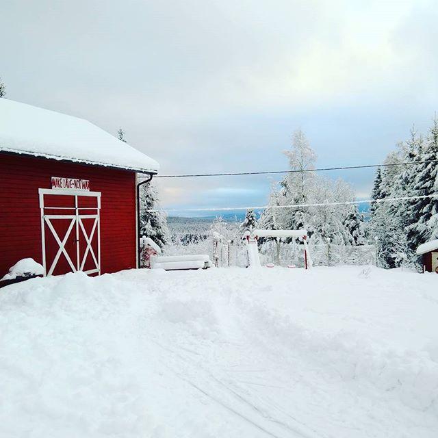 #liveterbestute #småbruket #winterwonderland