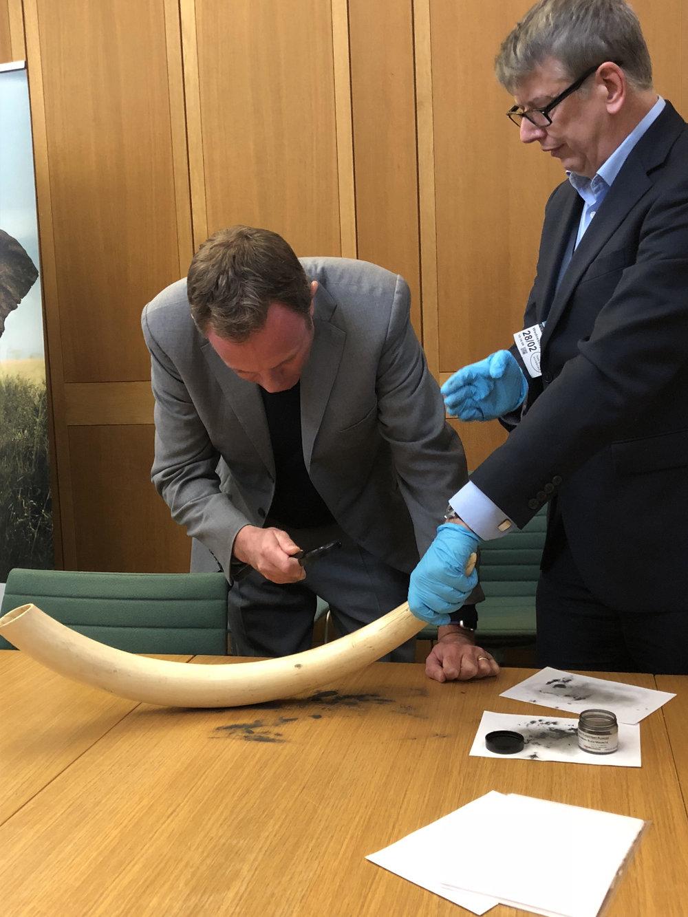 Nick Herbert inspecting innovative new methods of detecting fingerprints on elephant tusks at an International Fund of Animal Welfare (IFAW) event