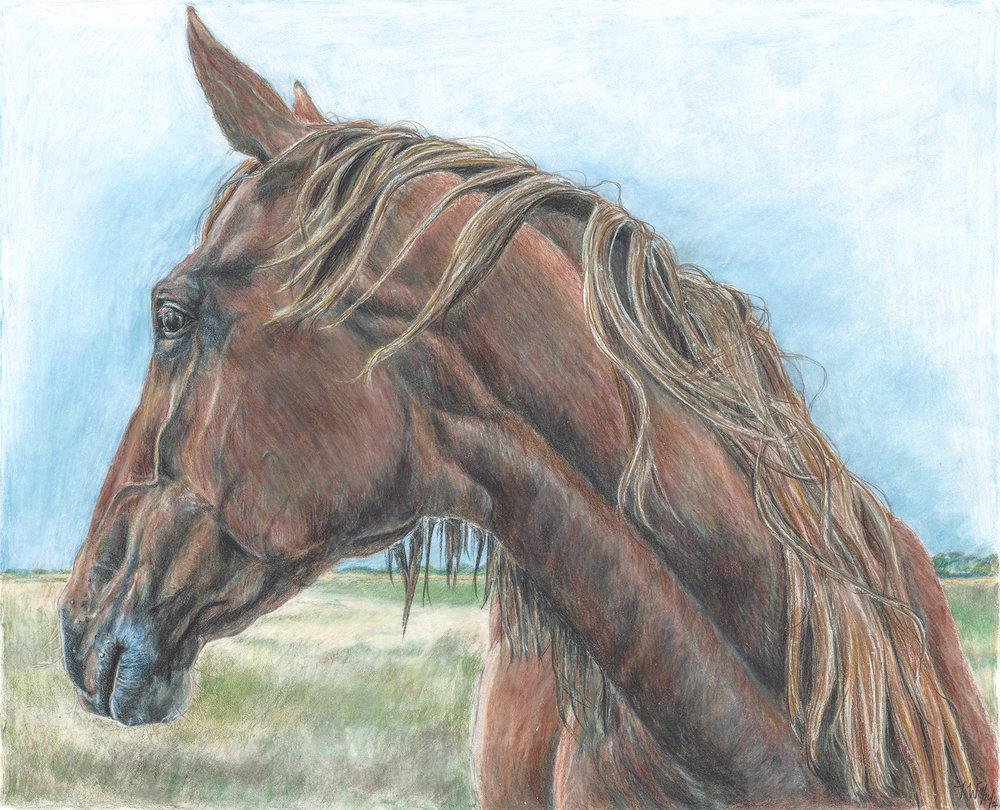 Brown Horse Looking Away.jpg