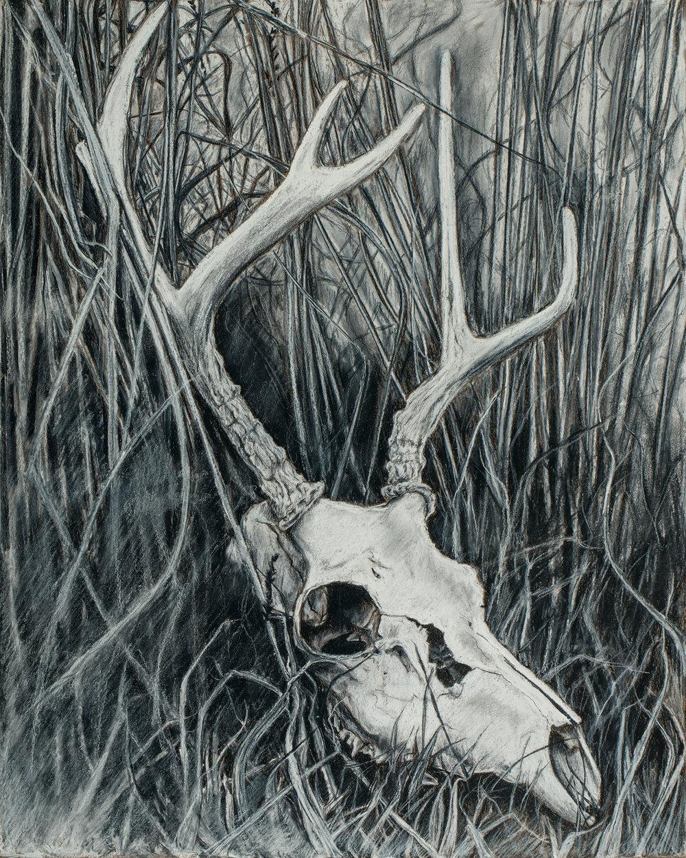 deer skull.jpg