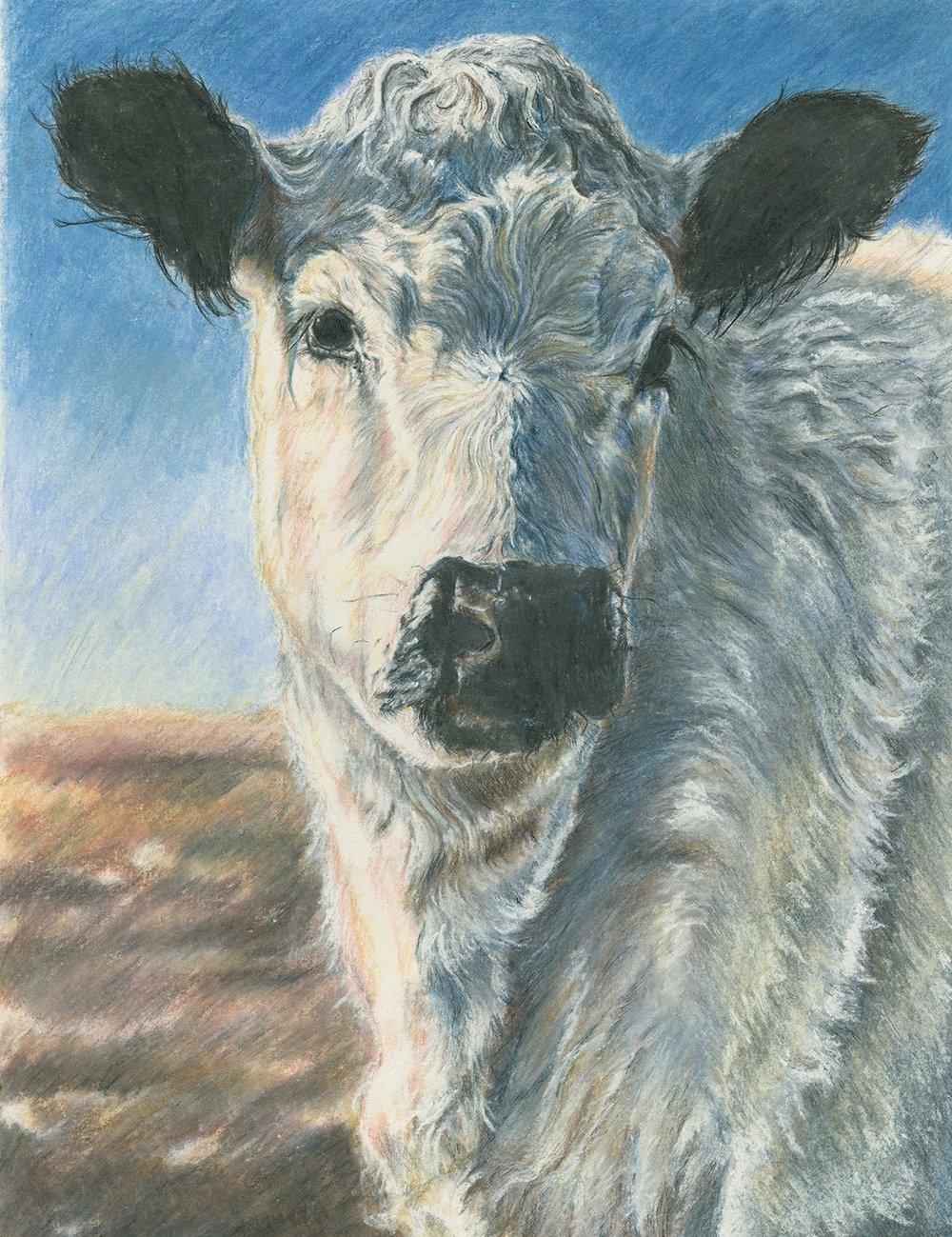 white calf (1).jpg