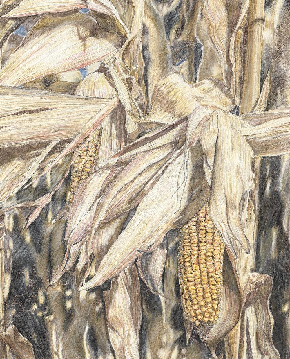 Corn II-small.jpg
