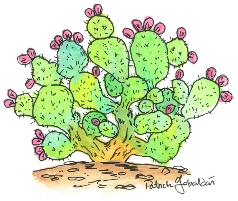 Prickly Pear.jpg
