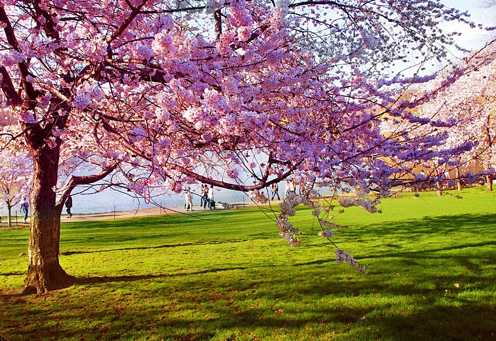 spring-washington-dc.jpg