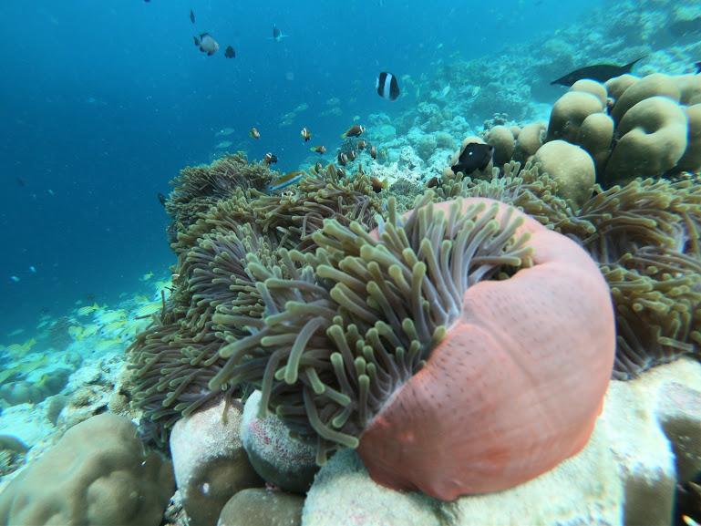 maldives 5.jpg