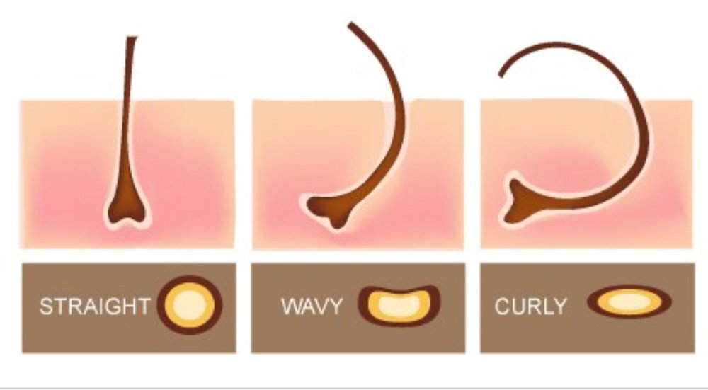Photo credit: Ruggedly Groomed   The shape of our follicles is a major determinant of our hair texture. If you were to look at the follicle of straight hair, you would find it's round. The follicle of curly hair has an oval shape. And the flatter the oval, the curlier the hair will be. Curly hair has more of these bonds than straight hair because the follicle shape and angle allows different regions of the hair to come closer together making these bonds easier to form.