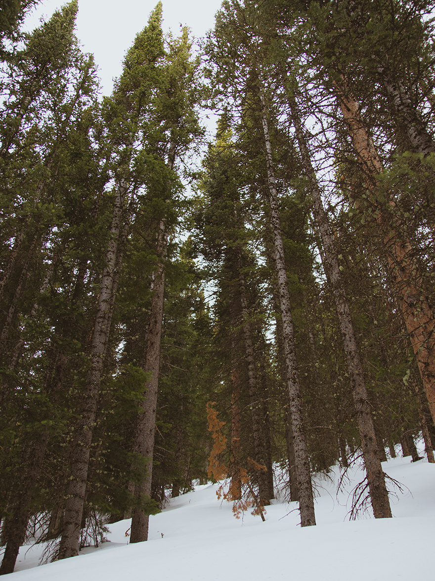 trees at bear lake