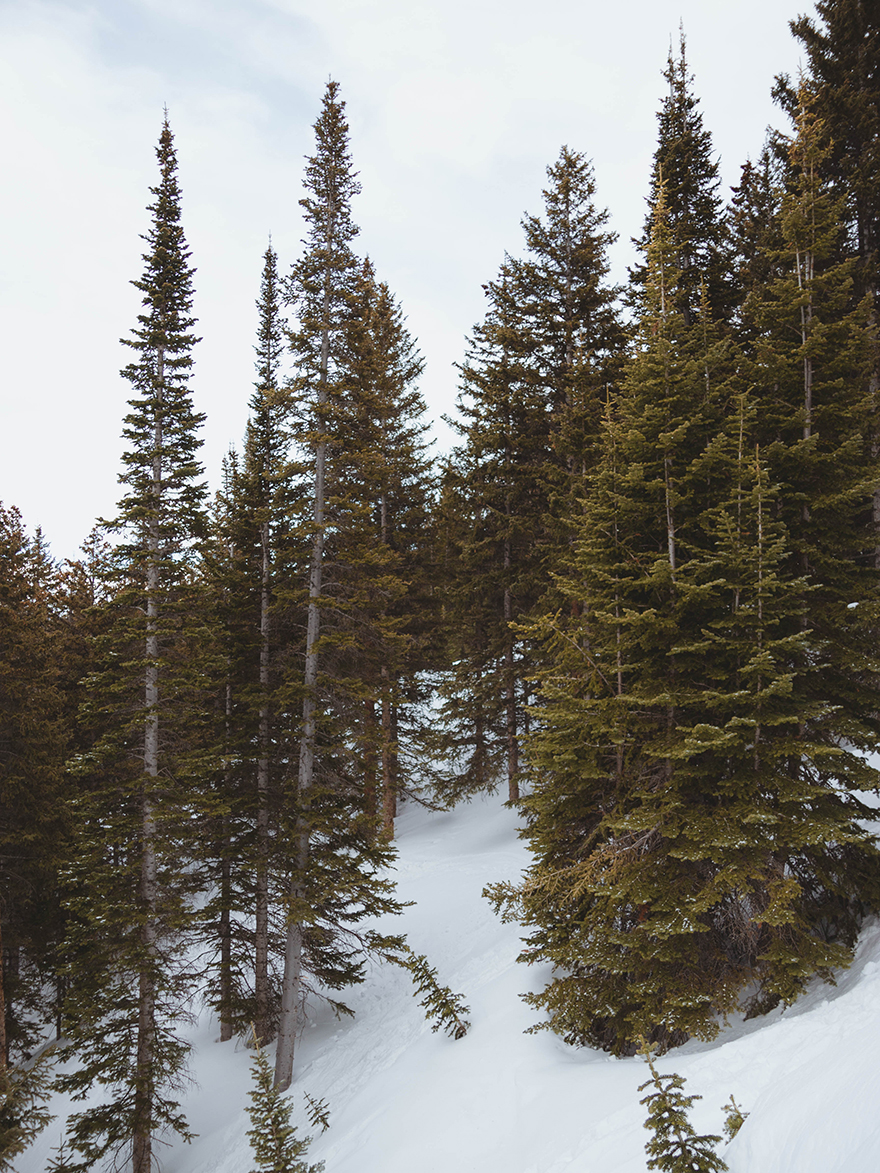 pine trees at bear lake with snow on ground