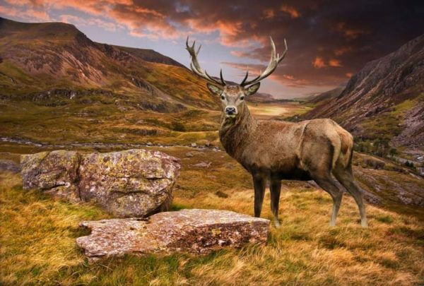 deer-mountain-600x405.jpg