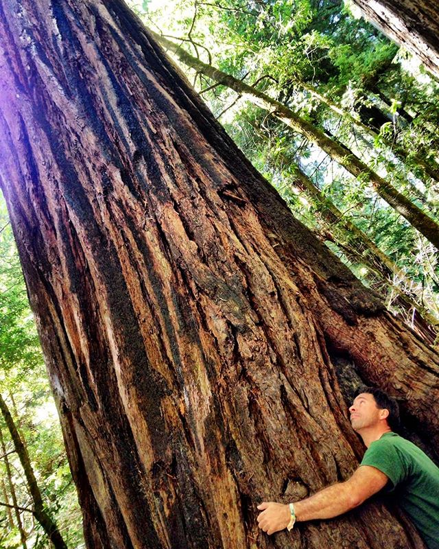 If you call yourself Spiritual or Conscious many people will hold you to a ridiculously high standard (like you are able to hold a Sequoia Tree)... The biggest misconception around spirituality and consciousness is that you are suppose to behave like a saint. You are supposed to be evolved and therefore, virtually flawless in your actions and reactions.  WRONG.  Consciousness is when the real work begins. It's not as if you become conscious, and all the sudden your life is easy and you have no issues. Consciousness makes you aware of things you were completely in the dark about before, however that doesn't mean you still don't have blind spots or your growing is complete. Once you become conscious your growing has just begun. When you become conscious you awaken to the reality that you have a choice. You can either choose to let your unconscious call the shots like it has all your life before you woke up, or you can make conscious choices. Does this mean you will be flawless in your choices?  HELL NO!  You are never flawless. YOU ARE HUMAN.  It doesn't mean you don't have any shit or any shadow. It doesn't mean you never get angry. It doesn't mean you don't have feelings and emotions. It doesn't mean you never get triggered. It doesn't mean dealing with unconscious people is always an exact science. It doesn't mean that calling people out isn't compassionate or loving. It doesn't mean that you accept apathy and unconscious projections with a smile or passivity. It doesn't mean you become holier than thou.  It's the great paradox AND THE BEAUTY of our existence that we are both spirit and human.  Powerful article about this for all my fellow friends at Work! :) The Dark Side of Spirituality and Consciousness http://www.sexyconsciousawake.com/blog/the-dark-side-of-spirituality-and-consciousness