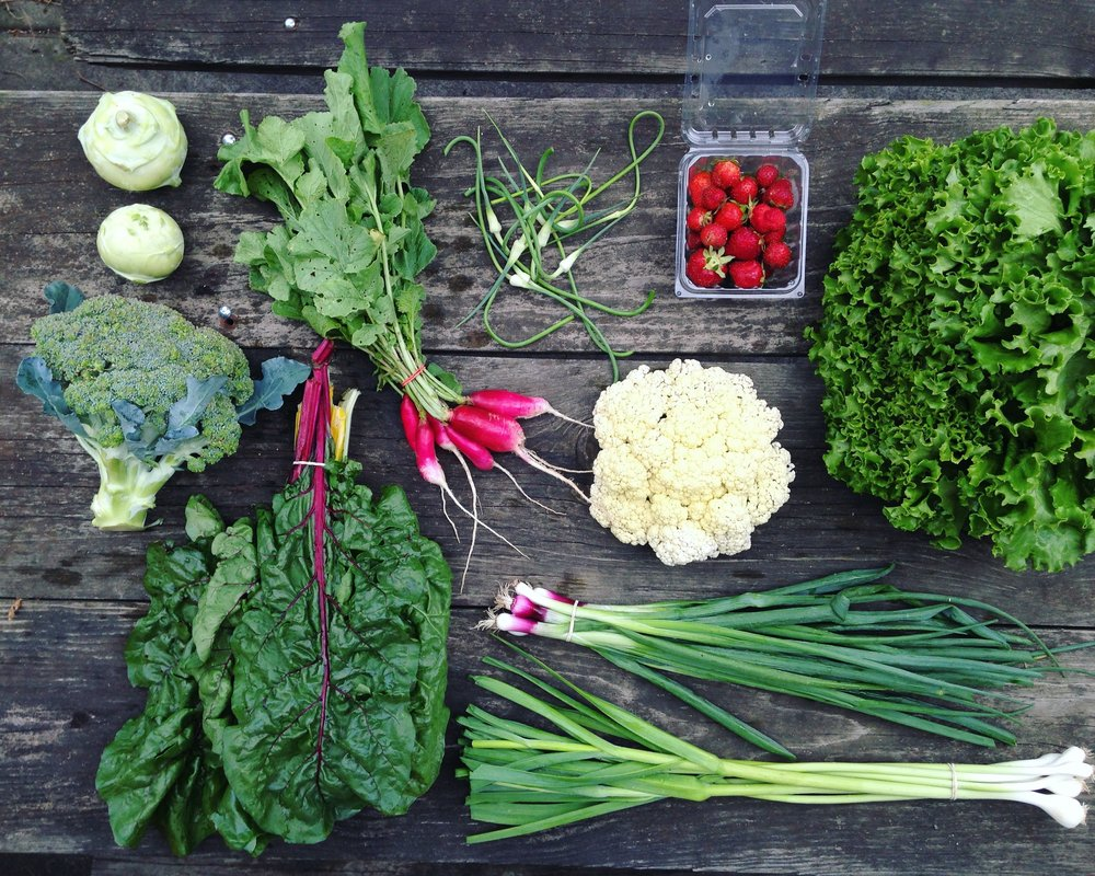 June Large Share // 6-10 items //  Sample box includes: Broccoli, escarole, rainbow chard, broccoli, cauliflower, kohlrabi, radishes, strawberries, green garlic, scallions and garlic scapes.