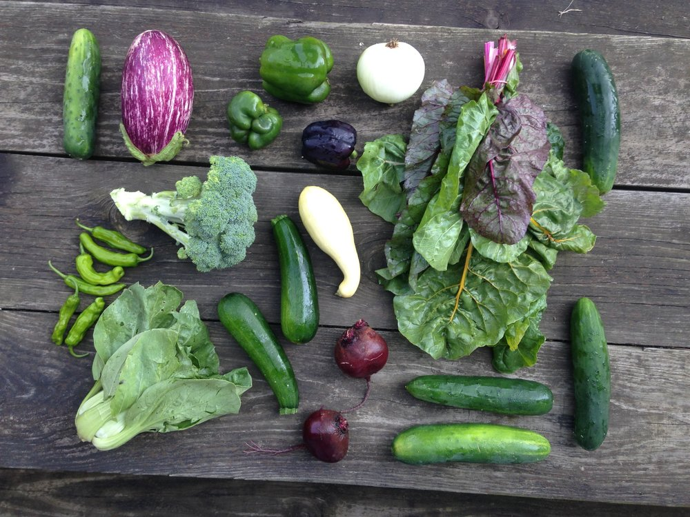 July Large Share // 8-12 items //  Sample box includes: Broccoli, bell peppers, shishito peppers, cucumbers, zucchini, summer squash, beets, eggplant, rainbow chard, bok choy and onion.