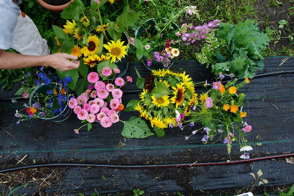 Flower Bouquet Share - Provided by Goat House Flower$130 for bouquets delivered every-other-week June, July, August and September (8 total deliveries)