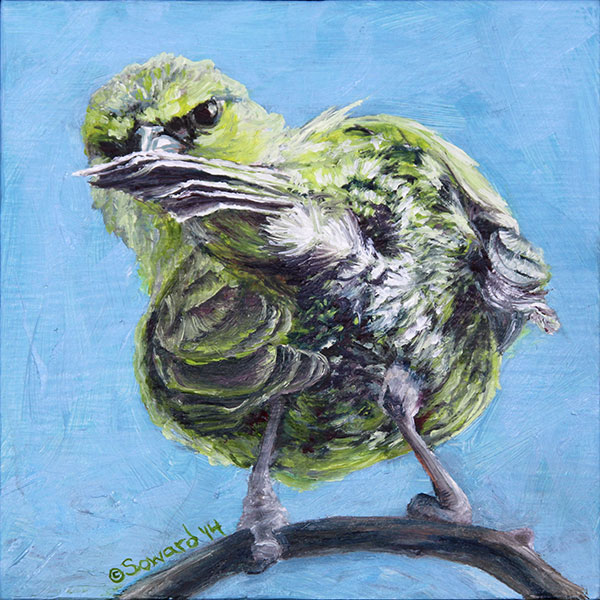 Birds - Paintings of birds (primarily birds endemic to Hawaii) by Sarah Soward.