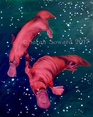 Gemini Platypi copyright Sarah Soward