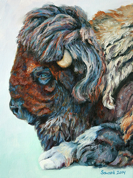 My Buffalo is a Bison  copyright Sarah Soward.
