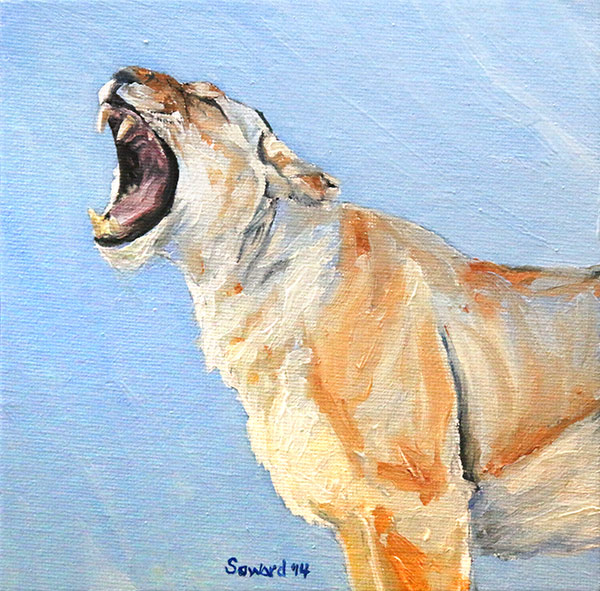 The Yawn, Lioness  copyright Sarah Soward.