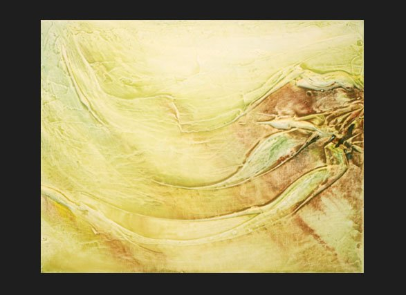 Miscanthus  copyright Sarah Soward.
